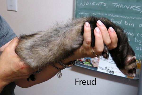 Freud_2